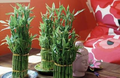 sivatagi rózsa wikipédia