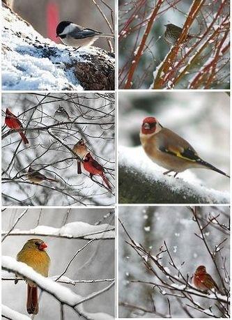 """Képtalálat a következőre: """"madarak téli etetése"""""""